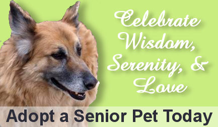 Learn the Care Required to Adopt a Pet